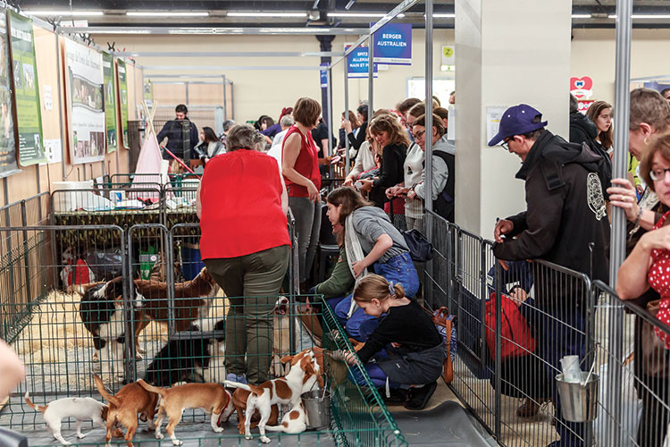 Le village des chiens de race Paris Animal Show